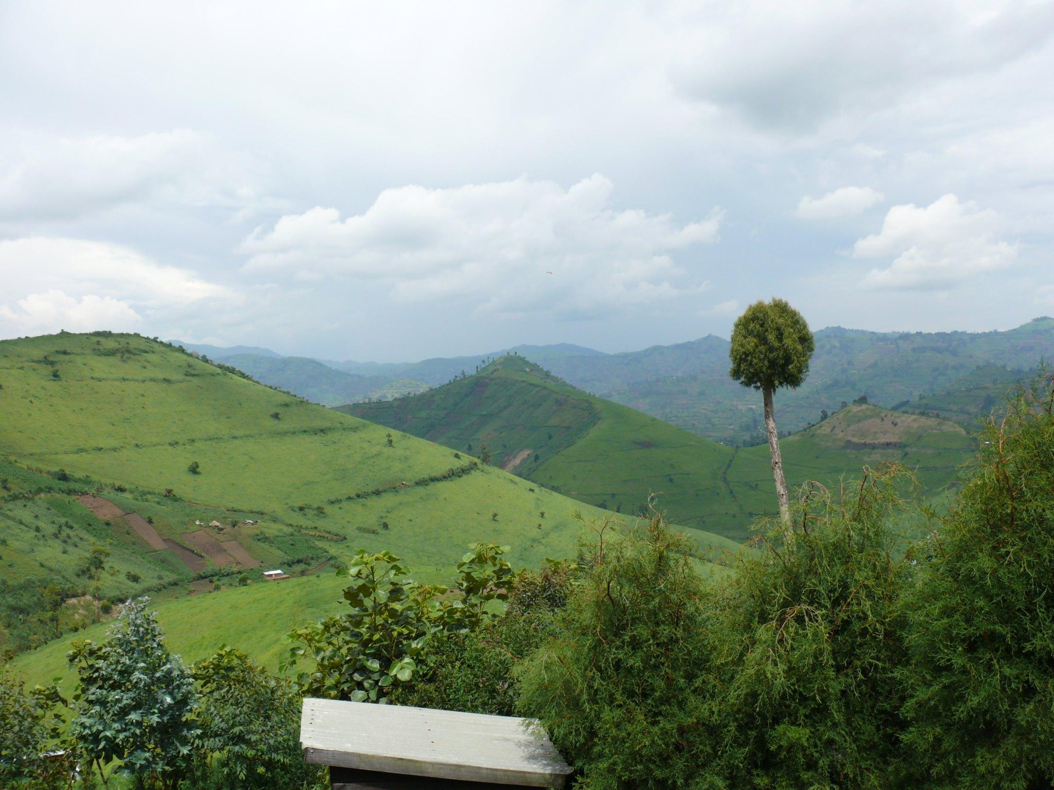 die grünen Hügel von Masisi