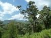 Weg zum Visokekrater -Rwanda